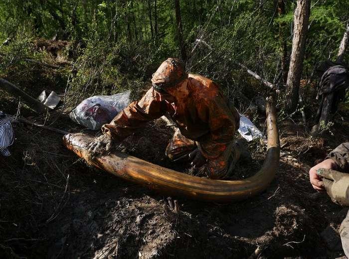 «Черные археологи» в поисках бивней мамонта