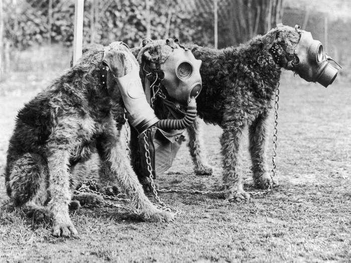 Четвероногий воин: история боевых псов