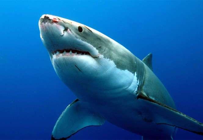 Они размножаются! 5 зверских фактов о сексе акул, которые ты точно не знали!