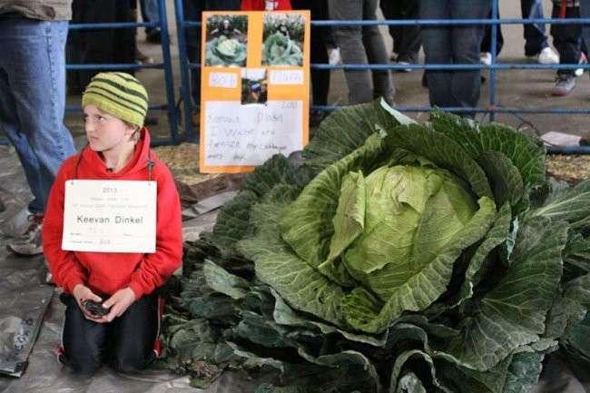 Овощи гиганты-рекордсмены