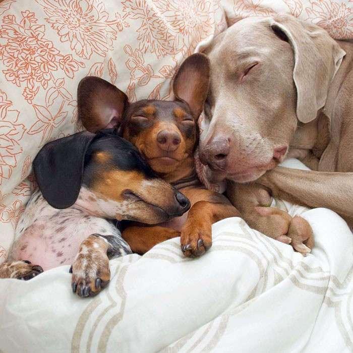 Две собаки приняли нового щенка как родного, доказывая, что среди животных существует дружба