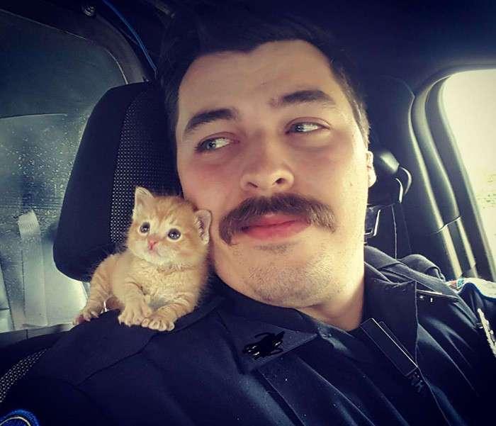 Полицейский приютил котенка и теперь они сражаются с преступностью вместе