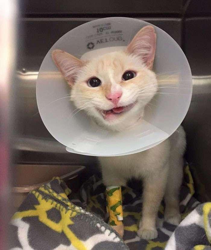 Сломанная челюсть подарила кошке загадочную