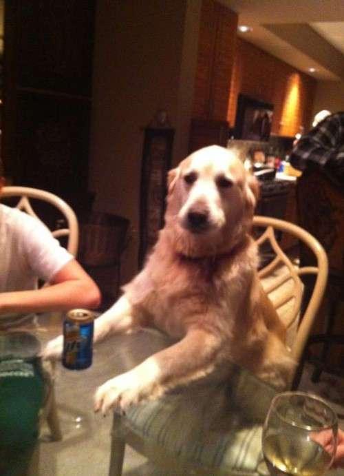 Эти собаки думают, что они не собаки!