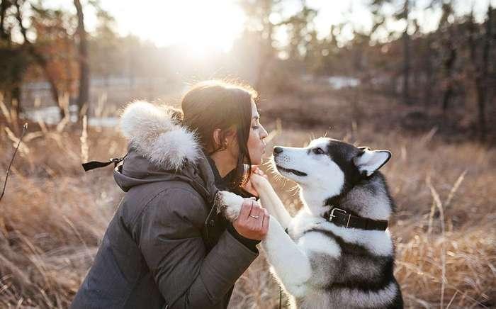 5 фактов о собаках, не обижайте их