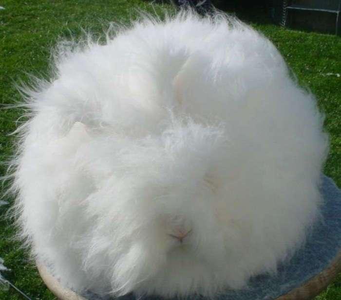 Когда кролики это только ценный мех