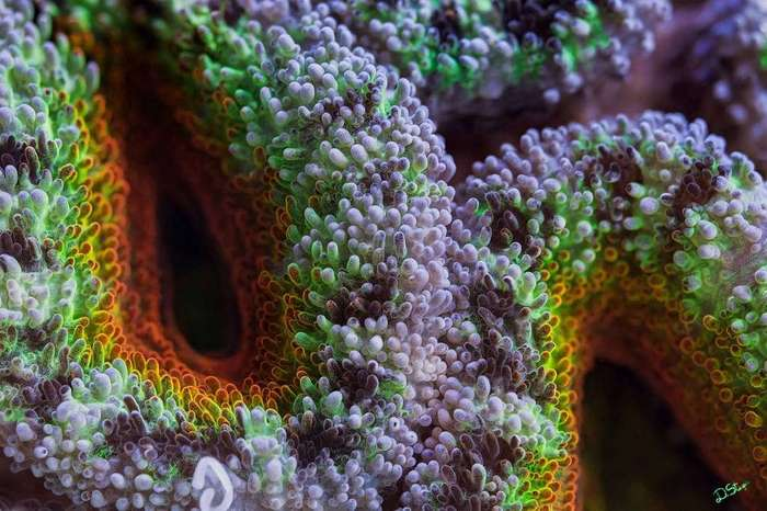 Серии ярких макрофотографий кораллов Большого Барьерного рифа