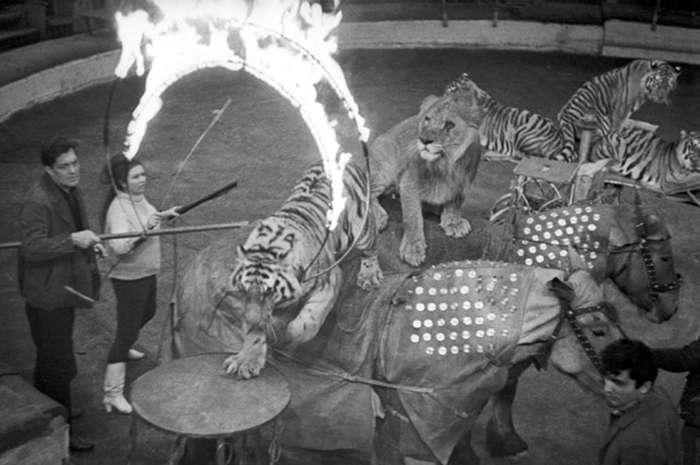 Звезда «Полосатого рейса»: как сложилась судьба укротительницы тигров
