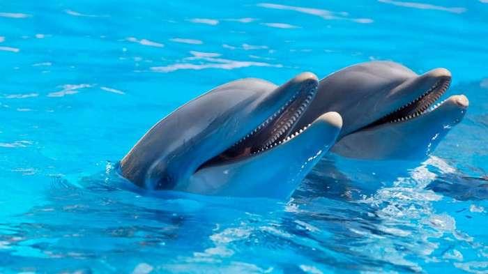 15 опасных животных, которые только кажутся милыми