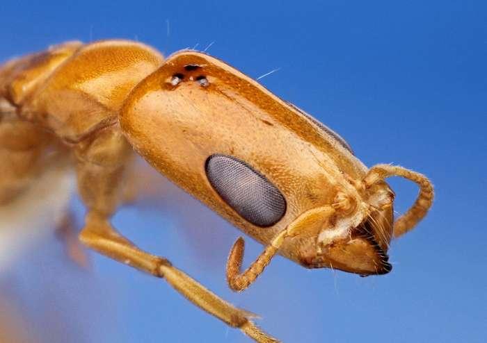 Захватывающая макрофотография насекомых