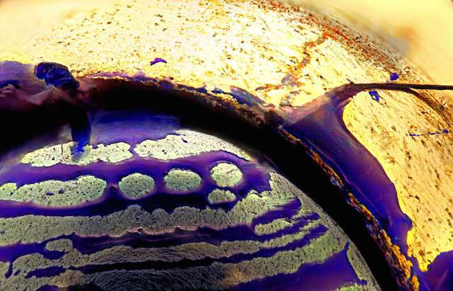 Параллельная Вселенная: Фотографии сделанные под микроскопом
