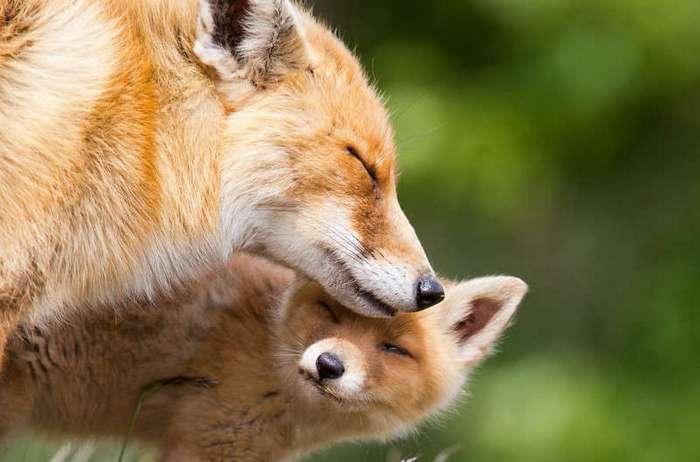 26 чудесных семейных фотографий из мира животных
