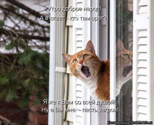 Прикольные картинки от сайта Котоматрица