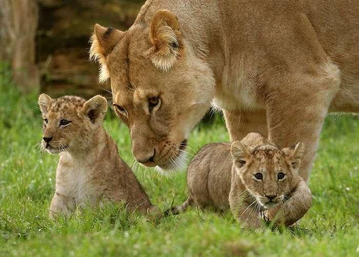 Новые цари зверей
