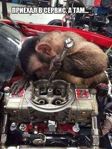 Прикольные фото обезьян