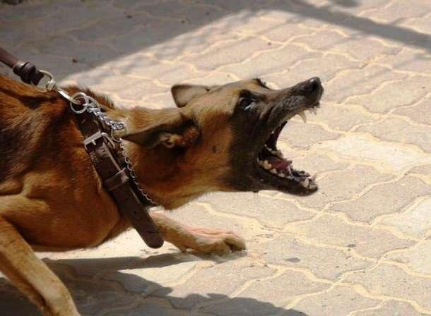 Интересные факты про собачьи бои
