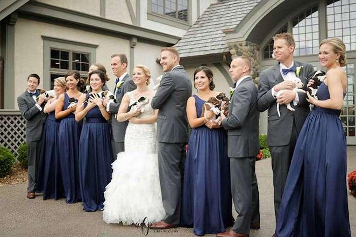 Помощь бездомным животным вместо ненужных букетов: пара отметила свадьбу с 13 щенками на руках