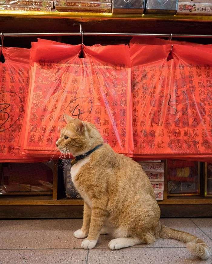 Усатая гвардия: секретная жизнь котов в гонконгских магазинах