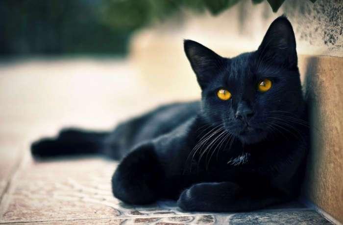 Дикие нравы Средневековья: почему и как люди боролись с кошками