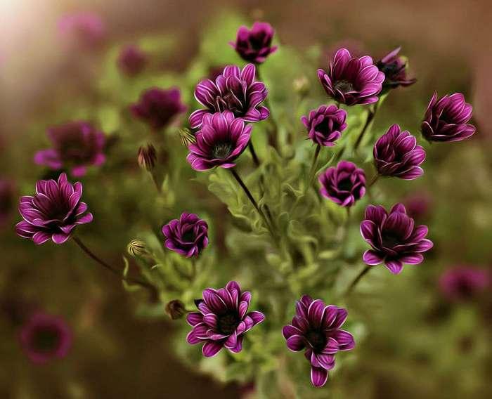Красота цветов в макрофотографии. Красивые фотографии цветов.