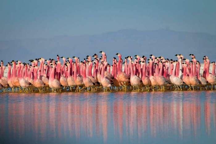 Планета Земля: лучшие снимки природы от фотографов ВВС