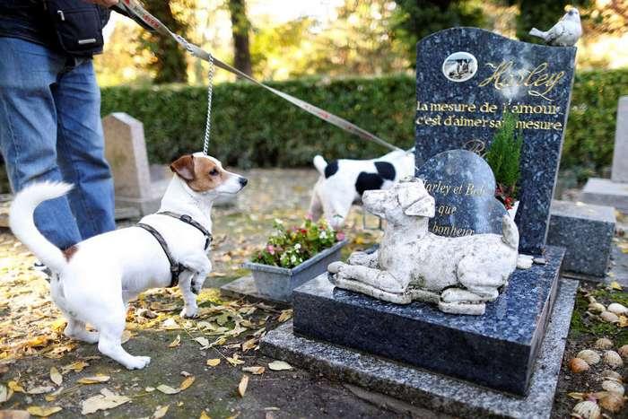 Кладбище собак