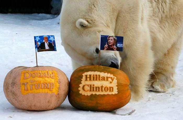 Как мир реагирует на выборы в США