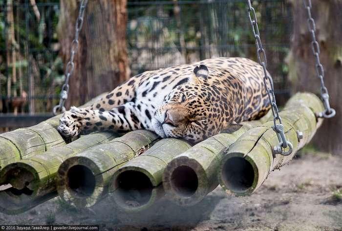 Самый главный зоопарк Германии