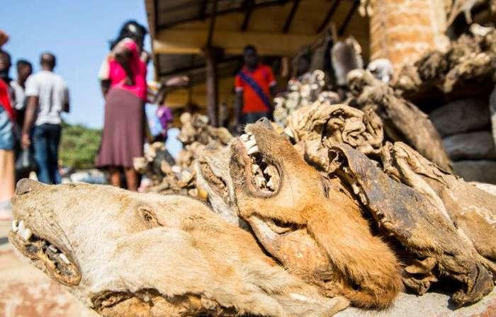 Рынок для колдунов вуду в Африке