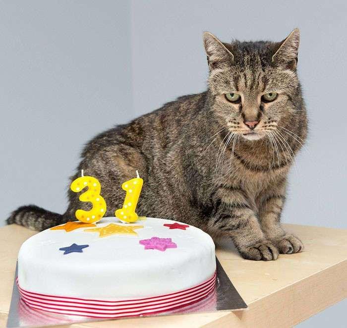 Старейший кот в мире отпраздновал 31-ый день рождения, и у него еще осталось много жизней