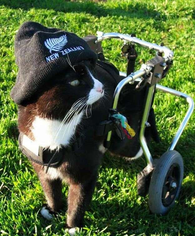 Этот кот-инвалид - воплощение воли к жизни!
