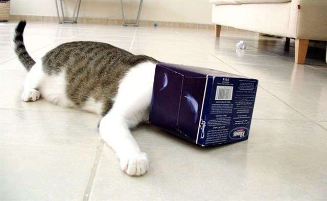 Кошки - удивительные обитатели нашей планеты! Интересные факты