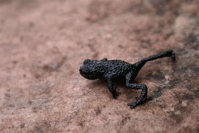 Животные, которых можно найти только в определенных частях света