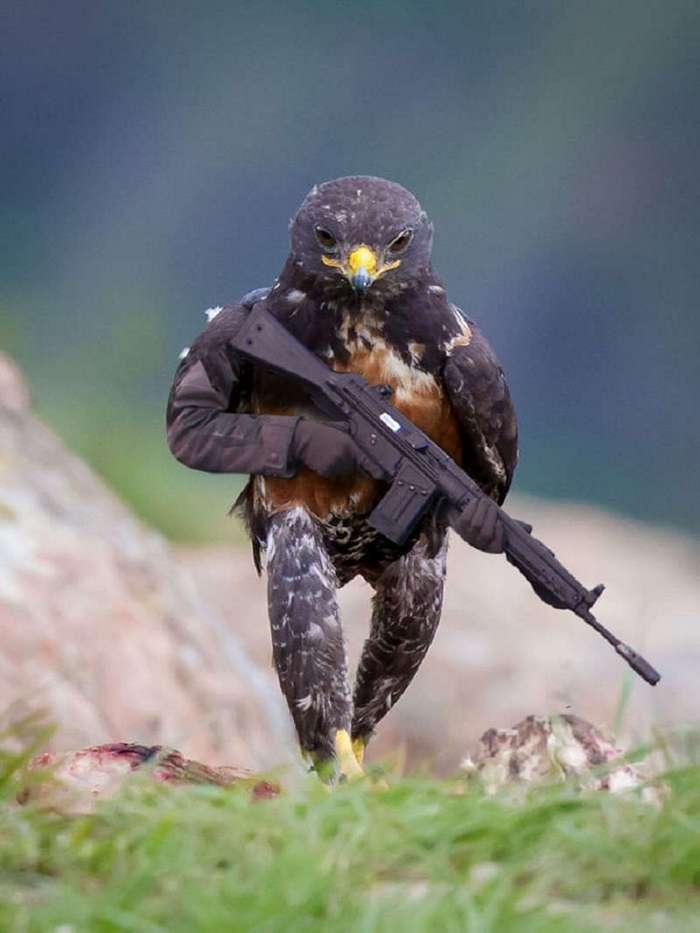 Пернатый воин