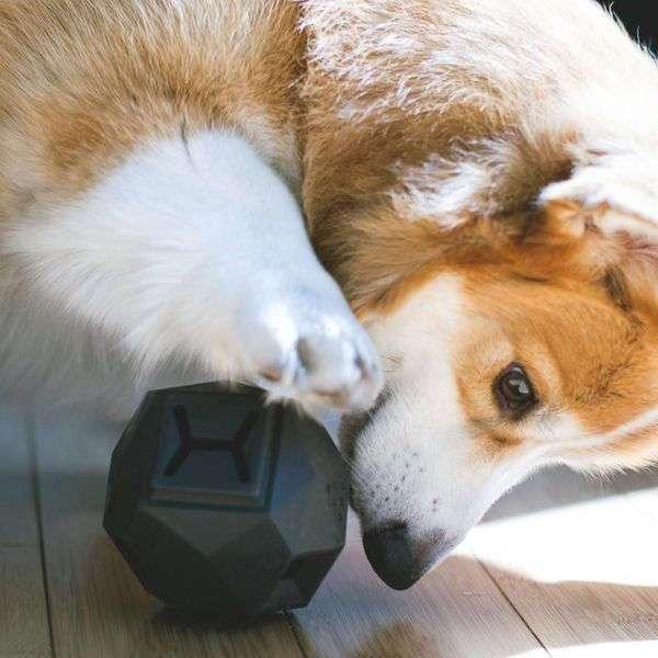 Игрушка-пазл для собак Odin
