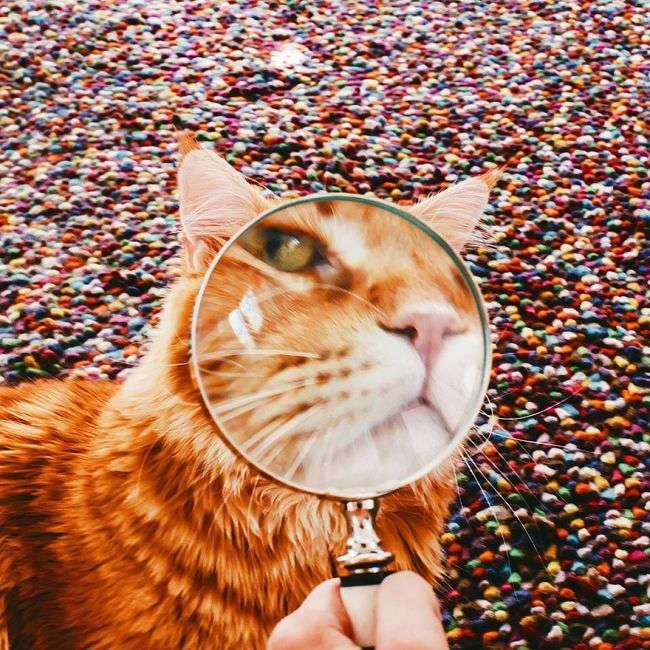 Фотосессия шикарного рыжего любимца по кличке