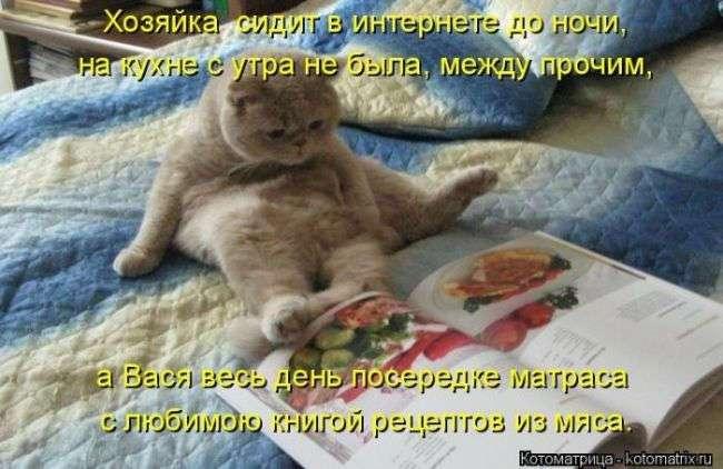 Смешная котоматрица