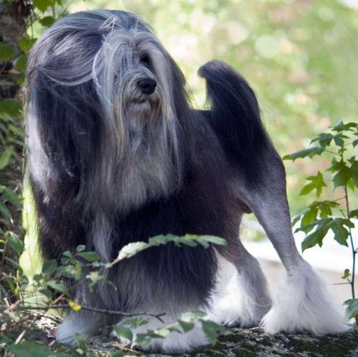 Самые необычные собаки. Лёвхен