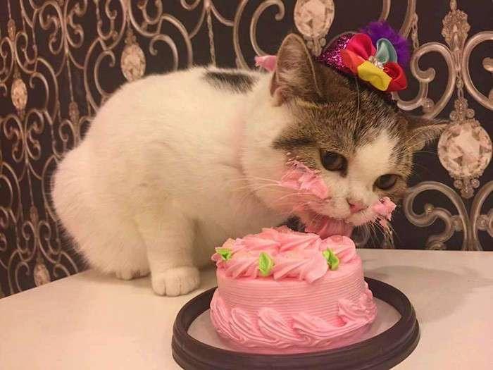 Как котик свой праздничный торт ел