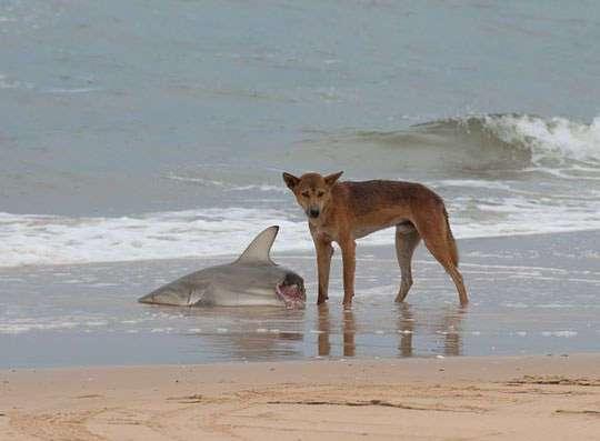 Австралия - страна-сказка! Только сказочка-то страшненькая