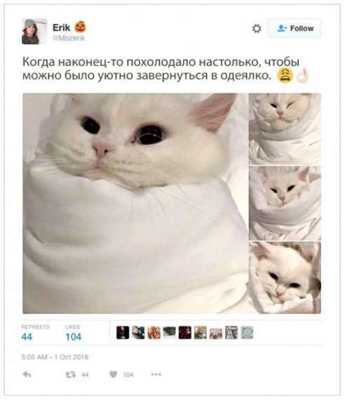 Остроумие твиттерчян