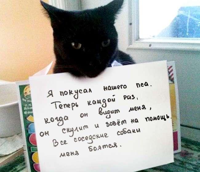 15 причин понять и простить кота