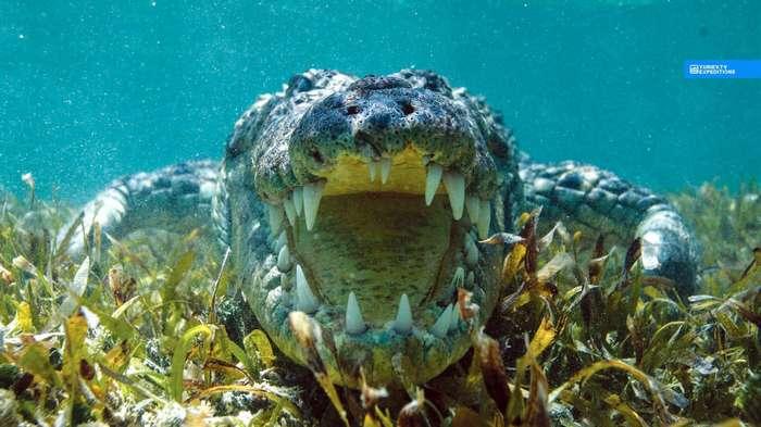 Фото животных под водой