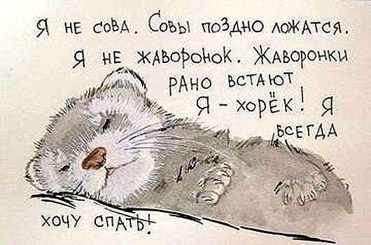 """Вся правда о """"совах"""" и """"жаворонках"""""""