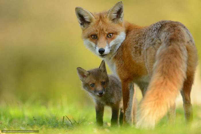 Топ 10 наиболее красивых животных в мире