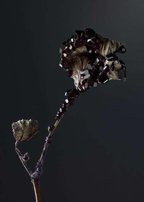 Органические и неорганические: 8 удивительных цветов, украшеных драгоценными камнями