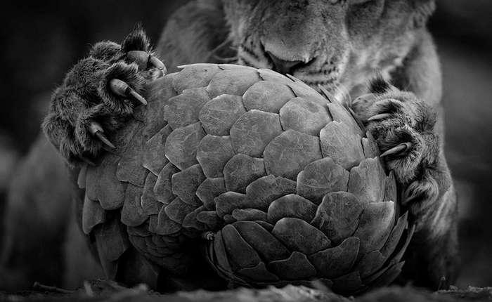 Лучшие фото дикой природы этого года