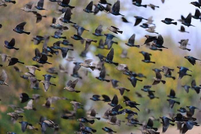 Законы мафии в птичьем мире