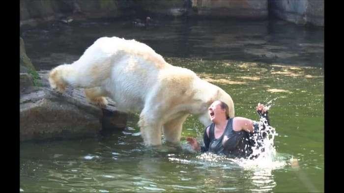 Тупой и еще тупее: 15 идиотов, которые перелезли через забор в зоопарке