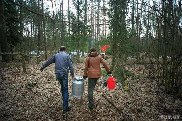 Как в Беларуси добывают березовый сок